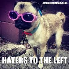 Cool Dog Meme - more modern dog memes modern dog magazine