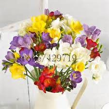 Fragrant Flowers For Garden - aliexpress com buy 100 freesia seeds gorgeous diy garden