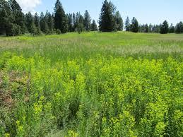 programs natural resources weeds and weed management workshop u2013 march 1 u2013 flathead conservation district