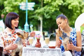 Patios Kansas City Patios To Visit With Your Pooch Thisiskc