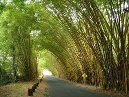 optimal resume builder undergraduate research ourblog brianna trees
