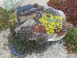 Rock Gardening Rock Garden Plants Gardening Design