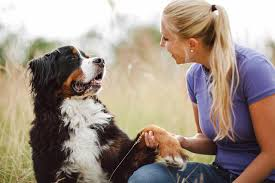 how to train dog to stop barking teach a dog to speak or be quiet
