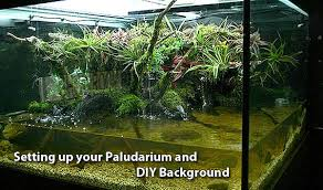 Aquascaping Shop Paludariums And Information By Eddy Planner March 2012