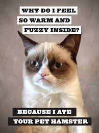 5 hilarious grumpy cat pictures mandy bryant bryant r this is