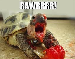 Turtle Memes - turtle memes are da bomb comforting derpy turtles