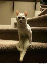 White Cat Meme - cat pics allergies sleeping vet white cats page 350