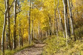 fall colors check u0027foliage u0027 campers