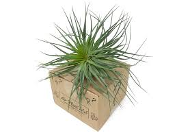 air plant mystery box the air plant hub