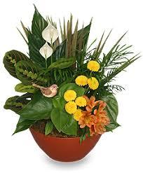 florist ocala fl touch dish garden of plants in ocala fl blue creek florist