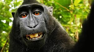 resume template for experienced engineers week wikipedia indonesia photographer and wikipedia in battle over rights to monkey selfie