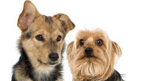 Pet Viral Petition Aims To Include Pet Food In Food Stamps