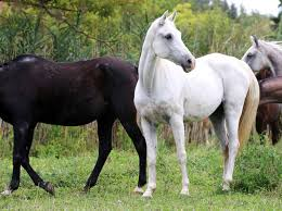 Are Horses Color Blind Can You Pass This Basic Test About Horses Viral Buff