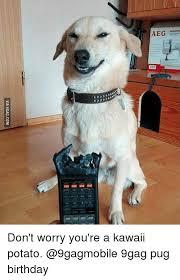 Birthday Pug Meme - via 9gagcom don t worry you re a kawaii potato 9gag pug birthday