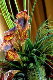Decorative Floral Arrangements Home by Decorative Floral Arrangements And Ceramics Home No 19 St Geo