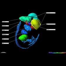 3d u0026 4d interactive microscopy visualization software imaris