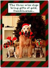 news lol tv funny dog christmas cards
