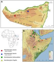 Map Of Somalia Rediscovery And A New Record Of Hemidactylus Laevis Reptilia