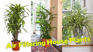 10 best air filtering house plants according to nasa youtube