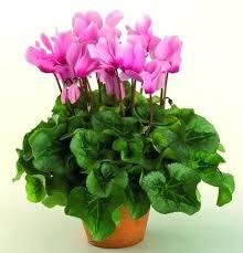 plante verte chambre à coucher quelle plante pour une chambre agrandir chambre de la couleur avec