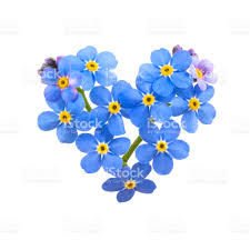 white and blue flowers a digital heart made of blue flowers on a white background stock