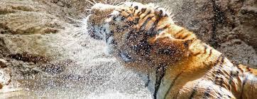 atracciones sobresalientes en denver visit denver
