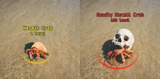 hermit crab using a skull for a shell pics