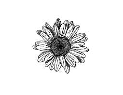 sunflower sketch via on we heart it