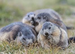 8 didn u0027t groundhog groundhog facts