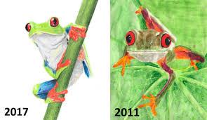 eyed tree frog agalychnis callidryas our