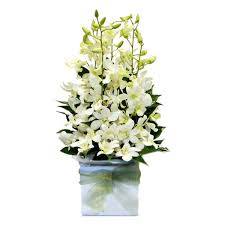 White Dendrobium Orchids Dendrobium Orchids U0026 Ceramic Flower Delivery Manhattan Florist