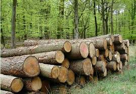 the advantages of choosing wood for your furniture vermont woods