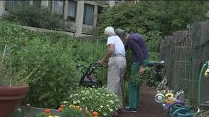 growing horticulture program helps with healthy aging cbs philly