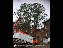 premier tree care tree surgeon in laleham staines uk