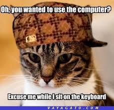 imagenes groseras de gatos grosero página 2