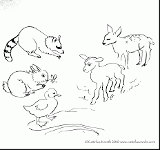 Excellent Spring Baby Animals Coloring Pages With Baby Animal Woodland Animals Coloring Pages