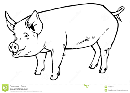 pig drawing hand stock vector image 60066713