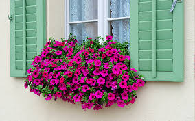 balkon grã npflanzen geranien balkonpflanzen gartenpflanzen topfpflanzen