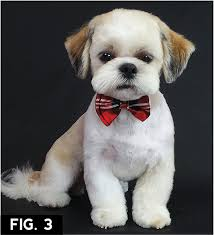 haircuts for shih tzus males asian freestyle groomer to groomer pet grooming news stories