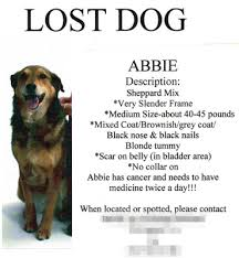 missing dog poster template related keywords u0026 suggestions long