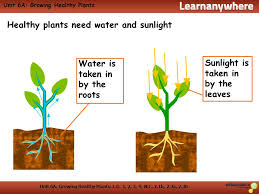 sunlight l for plants unit 6a interdependence and adaptation what does a plant need to