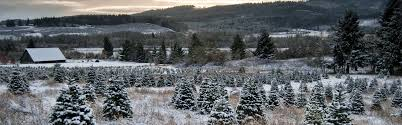vermont christmas tree farm development redstart