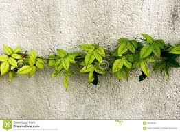 plants impressive plant decorating snail crawling indoor