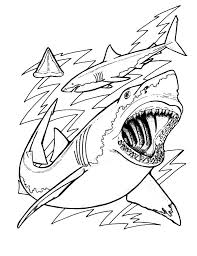 free shark teeth coloring pages unique coloring pages sharks