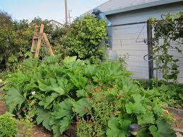 summer vegetable garden gardening ideas