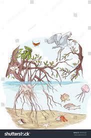marine ecosystem stock vector 339843065 shutterstock