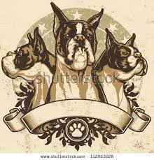 3 month boxer dog boxer dog stock images royalty free images u0026 vectors shutterstock