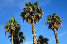 what are the parts of a palm tree hunker