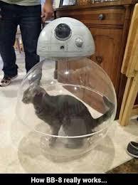 Star Wars Cat Meme - wars memes funny darth vader storm trooper