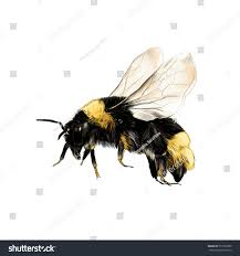 bumblebee flight vector color drawing stock vector 577207099